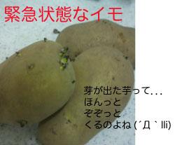 20100325_imo